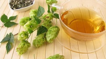 Hops natural stress remedy